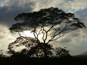 Akazien-Silhouette im Arusha Nationalpark. © 2015, Foto: Dr. Bernd Kregel