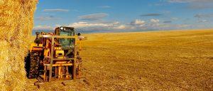 Der Getreideanbau ist eine Säule der Landwirtschaft in Washington State, USA. Foto: © 2013, Rainer Hamberger