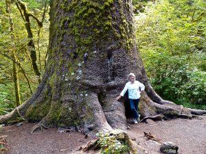 Riesenbäume an der Westküste. Foto: © 2013, Rainer Hamberger
