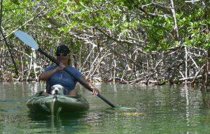 Mangroven-Paddelabenteuer mit Sue Cooper in Key West. oto: © Dr. Bernd Kregel, 2014