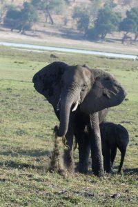 Elefanten im Chobe-Nationalpark. © Foto: Bernd Kregel