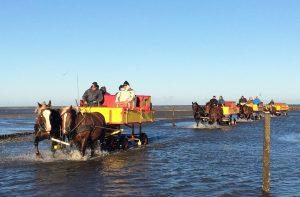 Auch an kalten Tagen ein Vergnügen. Fahrten mit der Pferdekutsche von und zu Neuwerk. © 2016, Münzenberg Medien, Foto: Stefan Pribnow